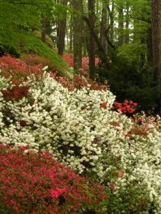 Callaway Gardens 2012